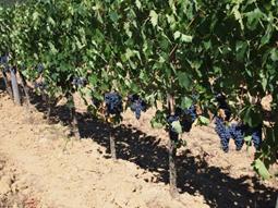 Viticoltura Emilia 2016 - 2