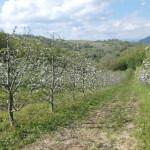 Lusi Milencovyc's farm